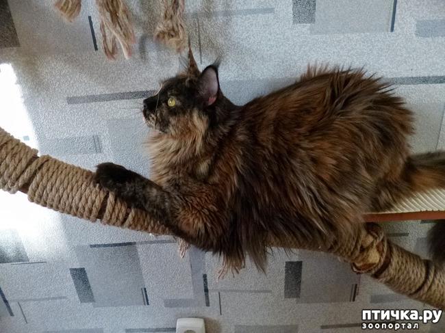 фото 6: Всюду кошки, кошки, кошки! Всюду кошки, господа!