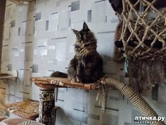 фото 7: Всюду кошки, кошки, кошки! Всюду кошки, господа!