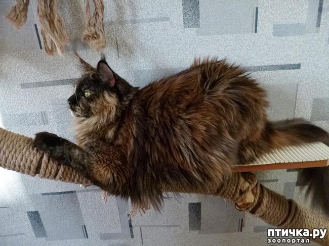 фото 10: Всюду кошки, кошки, кошки! Всюду кошки, господа!