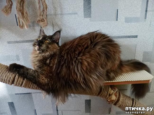 фото 11: Всюду кошки, кошки, кошки! Всюду кошки, господа!