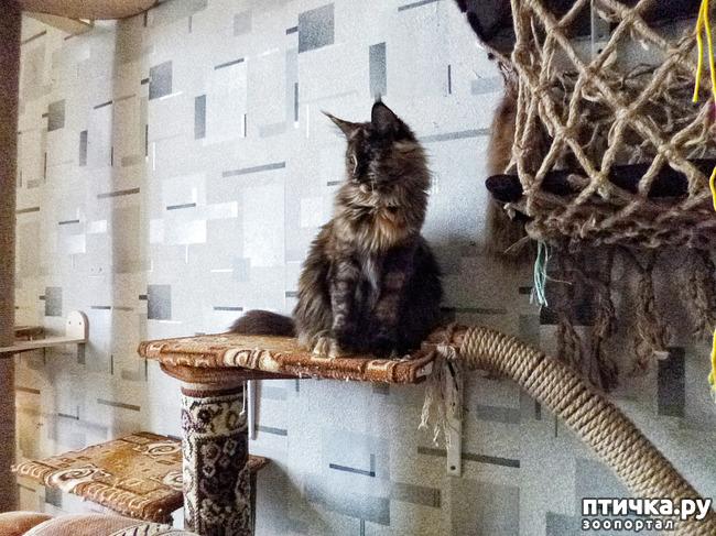фото 8: Всюду кошки, кошки, кошки! Всюду кошки, господа!