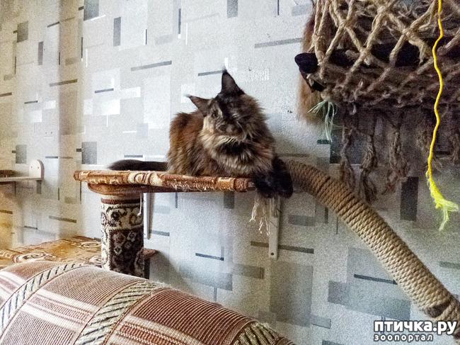 фото 9: Всюду кошки, кошки, кошки! Всюду кошки, господа!