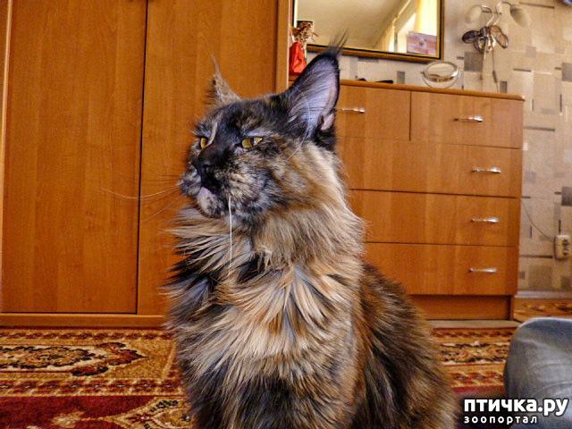 фото 18: Всюду кошки, кошки, кошки! Всюду кошки, господа!