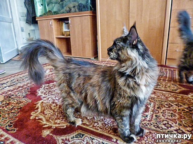 фото 17: Всюду кошки, кошки, кошки! Всюду кошки, господа!