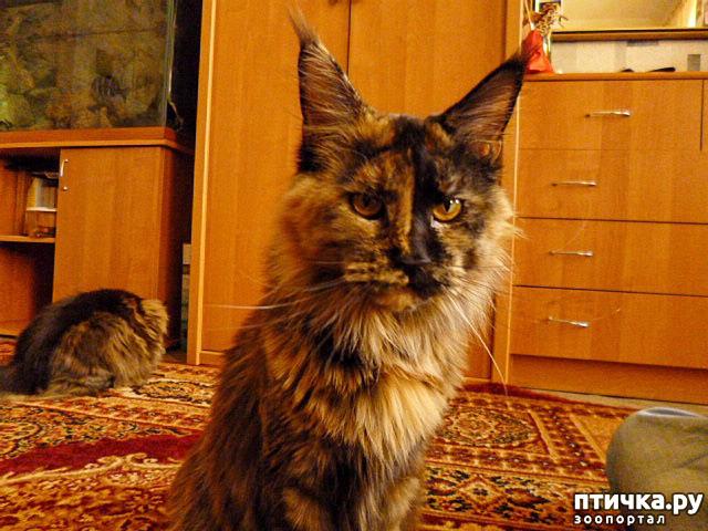 фото 19: Всюду кошки, кошки, кошки! Всюду кошки, господа!