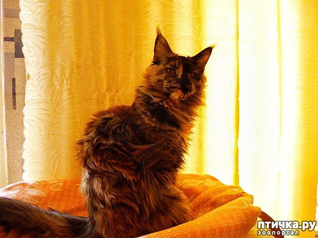 фото 20: Всюду кошки, кошки, кошки! Всюду кошки, господа!