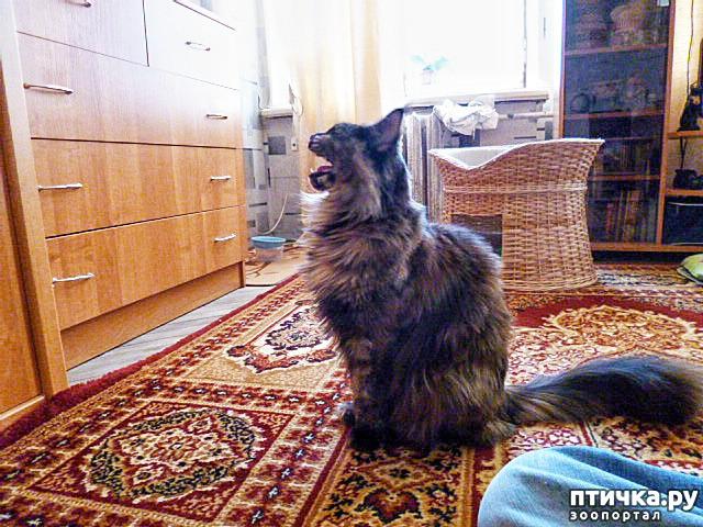 фото 21: Всюду кошки, кошки, кошки! Всюду кошки, господа!