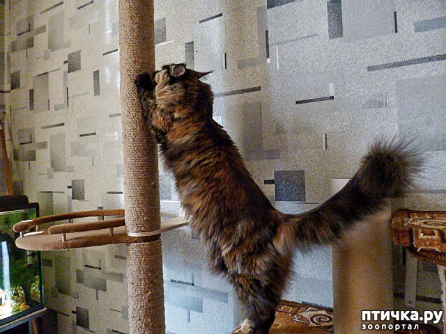 фото 23: Всюду кошки, кошки, кошки! Всюду кошки, господа!