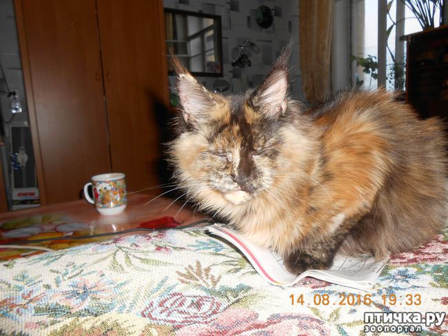 фото 15: Всюду кошки, кошки, кошки! Всюду кошки, господа!