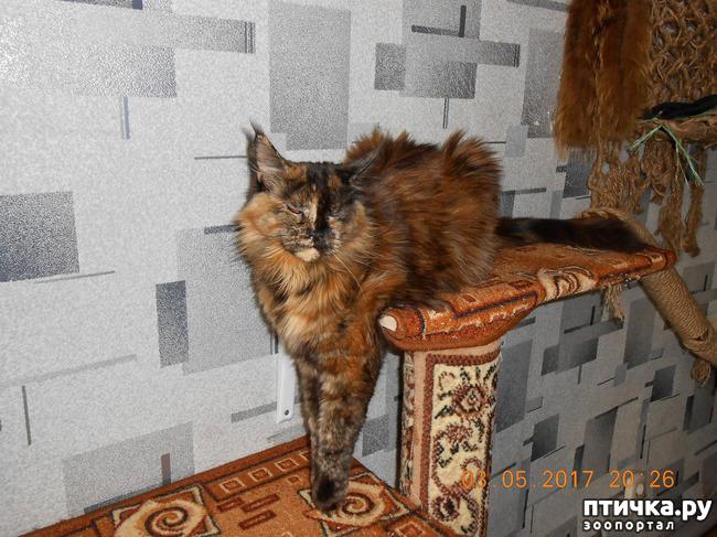 фото 16: Всюду кошки, кошки, кошки! Всюду кошки, господа!