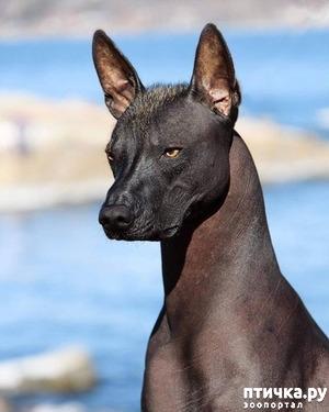 фото: Порода собак.