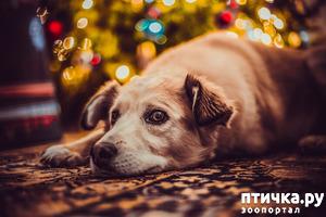фото: Подарки на Новый год для домашних любимцев