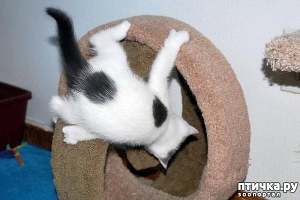 фото 2: Кошка стареет. Как жить и что делать?