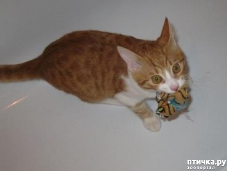 фото 3: Кошка стареет. Как жить и что делать?