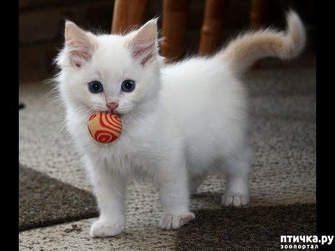 фото 5: Кошка стареет. Как жить и что делать?