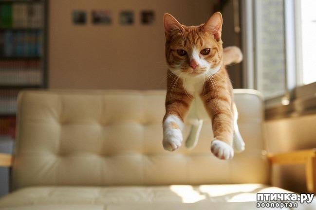 фото 6: Кошка стареет. Как жить и что делать?