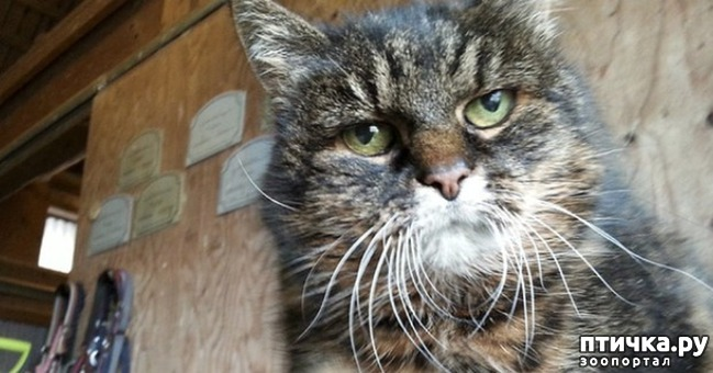 фото 9: Кошка стареет. Как жить и что делать?