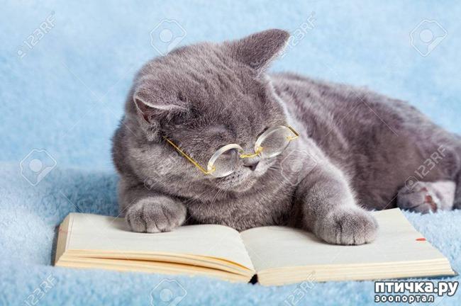 фото 1: Кошка стареет. Как жить и что делать?