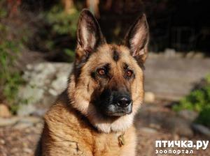 фото: Пронзительная история о том, как старый пес спас в человеке — человека