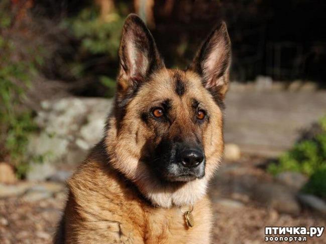 фото 1: Пронзительная история о том, как старый пес спас в человеке — человека