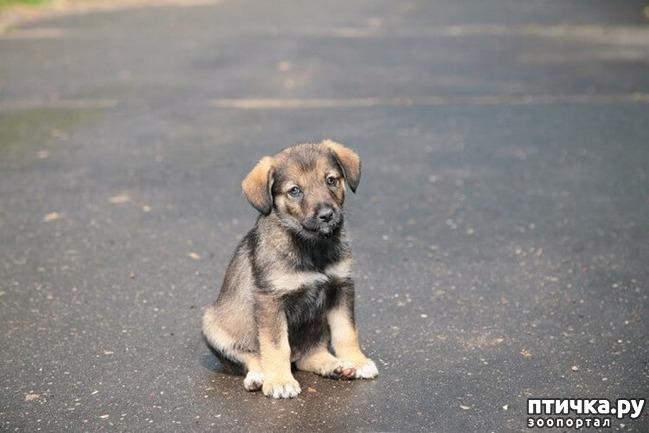 фото 2: Пронзительная история о том, как старый пес спас в человеке — человека