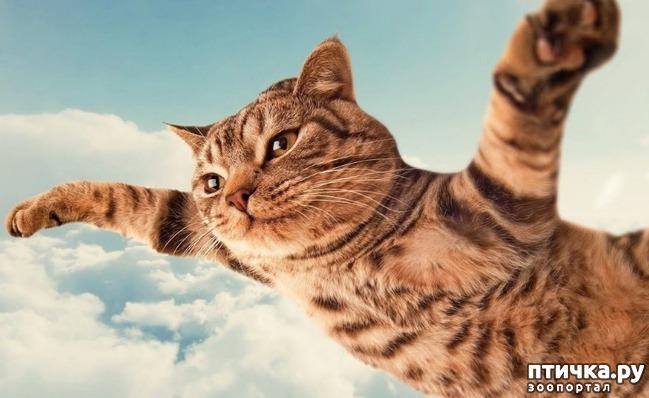 фото 1: А. Фобосов, А. Тетерин: Смешной до боли рассказ про кота Барсика