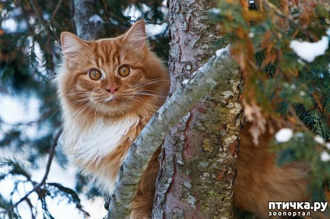 фото 1: Великие и знаменитые о кошках