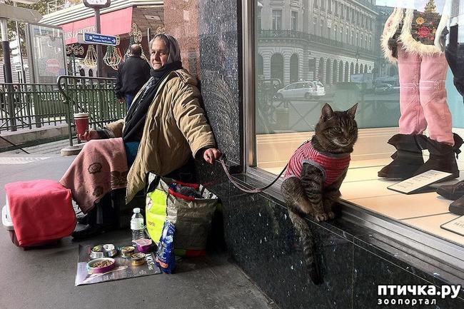 фото 2: Великие и знаменитые о кошках