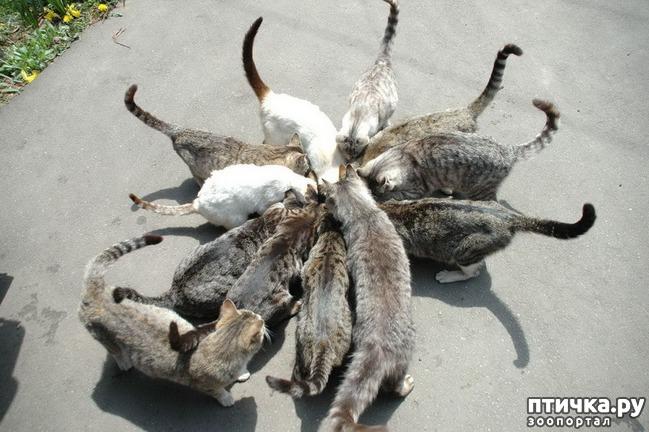 фото 3: Великие и знаменитые о кошках