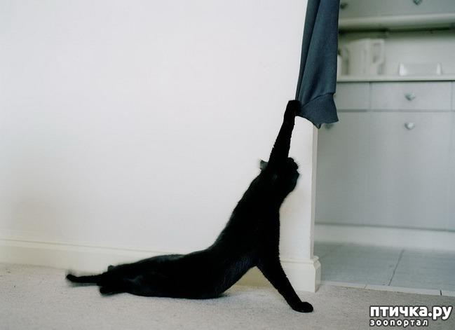 фото 6: Великие и знаменитые о кошках