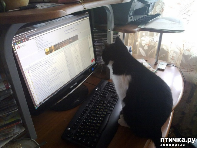 фото 7: Великие и знаменитые о кошках