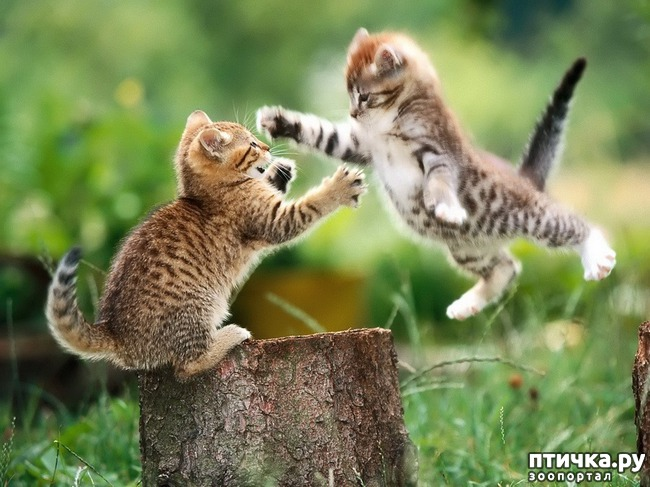 фото 8: Великие и знаменитые о кошках
