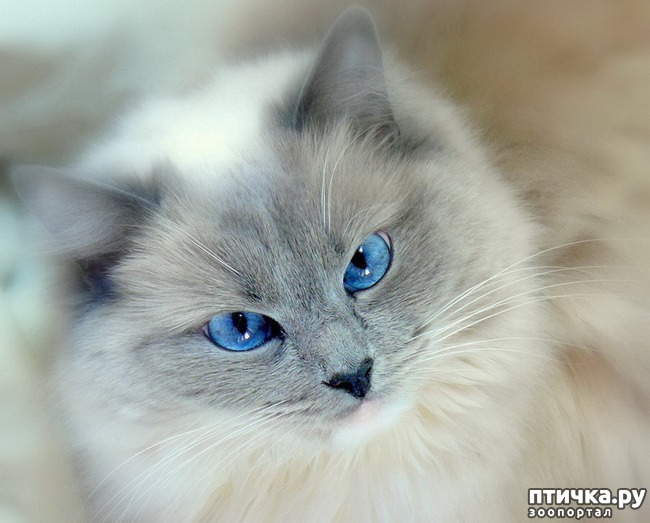 фото 10: Великие и знаменитые о кошках