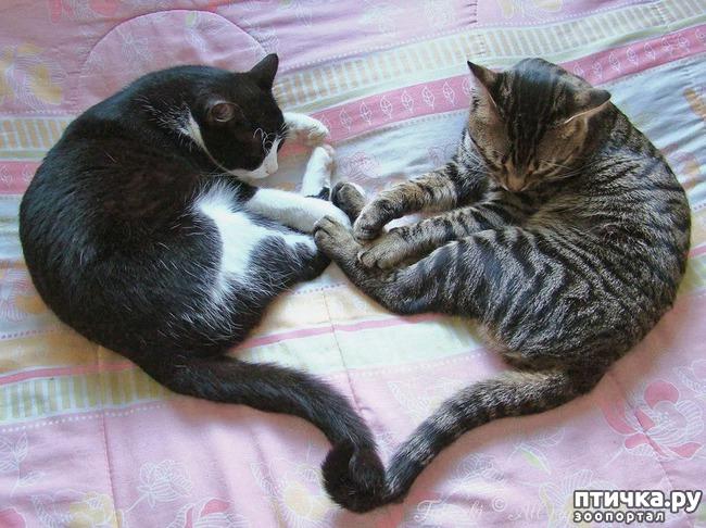 фото 12: Великие и знаменитые о кошках