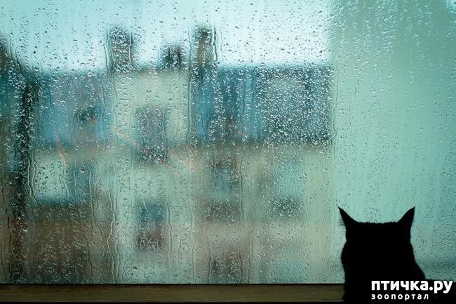фото 13: Великие и знаменитые о кошках