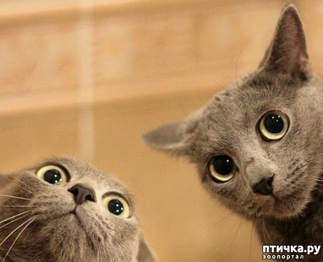 фото 14: Великие и знаменитые о кошках