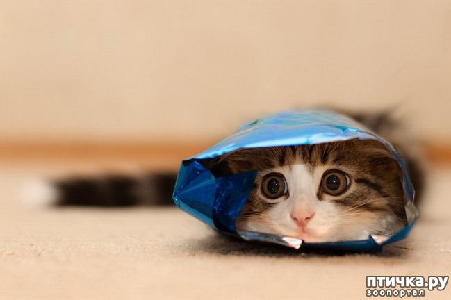 фото 16: Великие и знаменитые о кошках