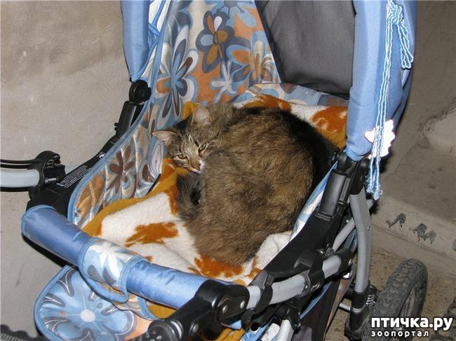 фото 17: Великие и знаменитые о кошках