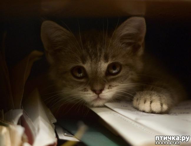 фото 18: Великие и знаменитые о кошках