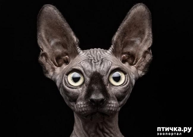 фото 22: Великие и знаменитые о кошках