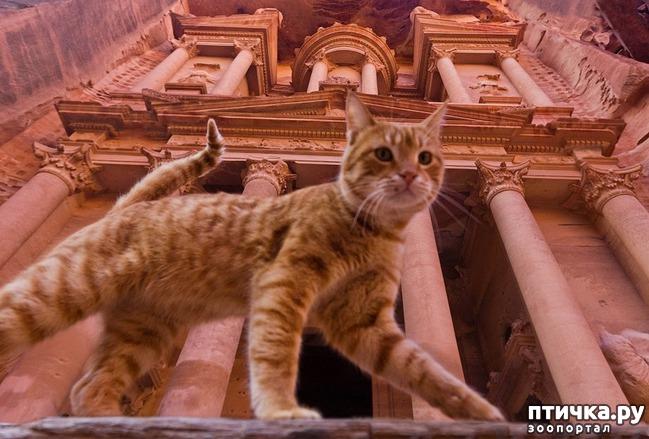 фото 23: Великие и знаменитые о кошках