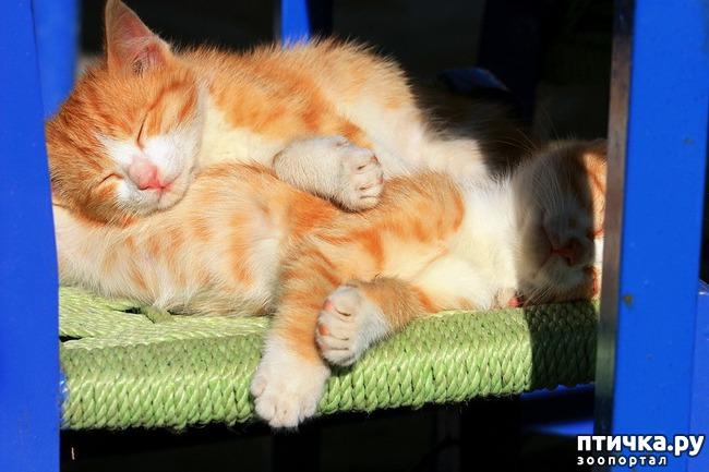 фото 24: Великие и знаменитые о кошках