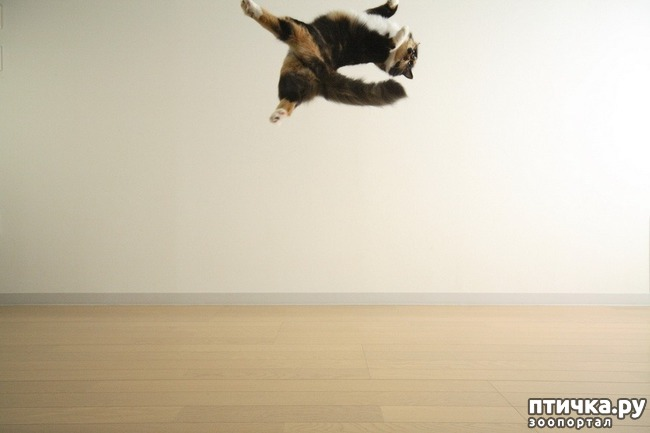 фото 26: Великие и знаменитые о кошках