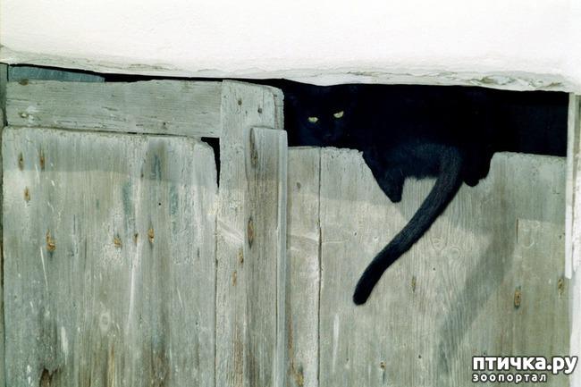 фото 27: Великие и знаменитые о кошках