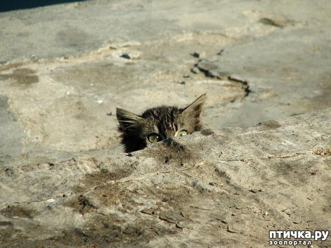 фото 28: Великие и знаменитые о кошках