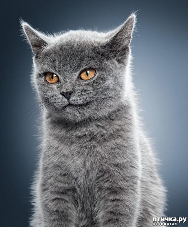 фото 29: Великие и знаменитые о кошках
