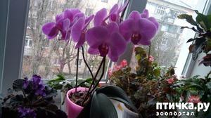 фото: Зимние цветочки