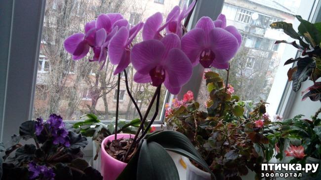 фото 1: Зимние цветочки