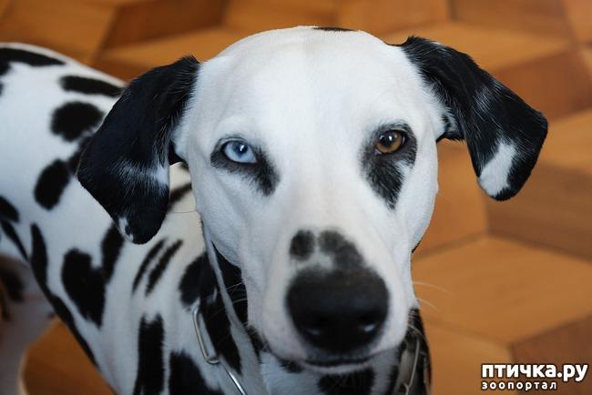 фото 5: Гетерохромия: каково жить с разными глазами.