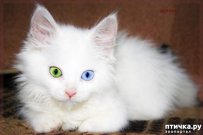 фото 6: Гетерохромия: каково жить с разными глазами.